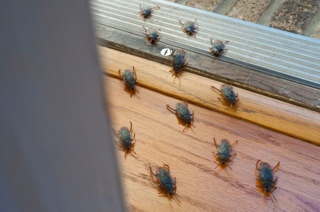 cockroach infestation at home