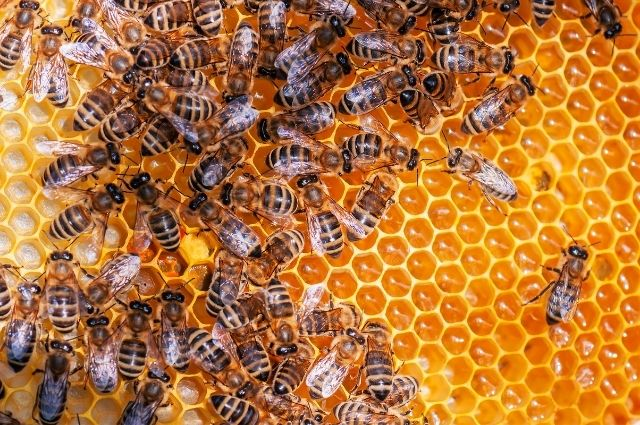 bees in their hive