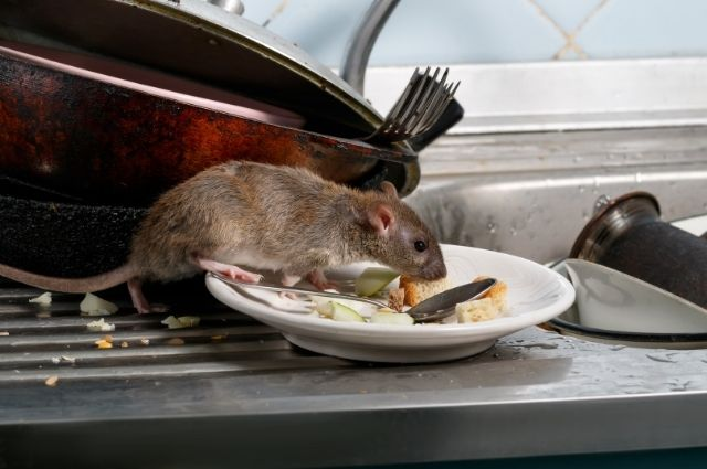 a mouse in a dirty kitchen
