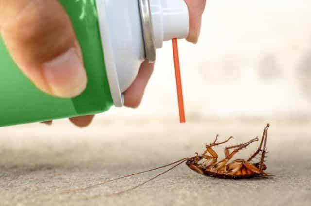 safe pest control against cockroach